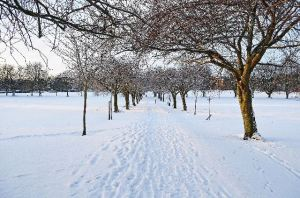 winter_seasons_snow